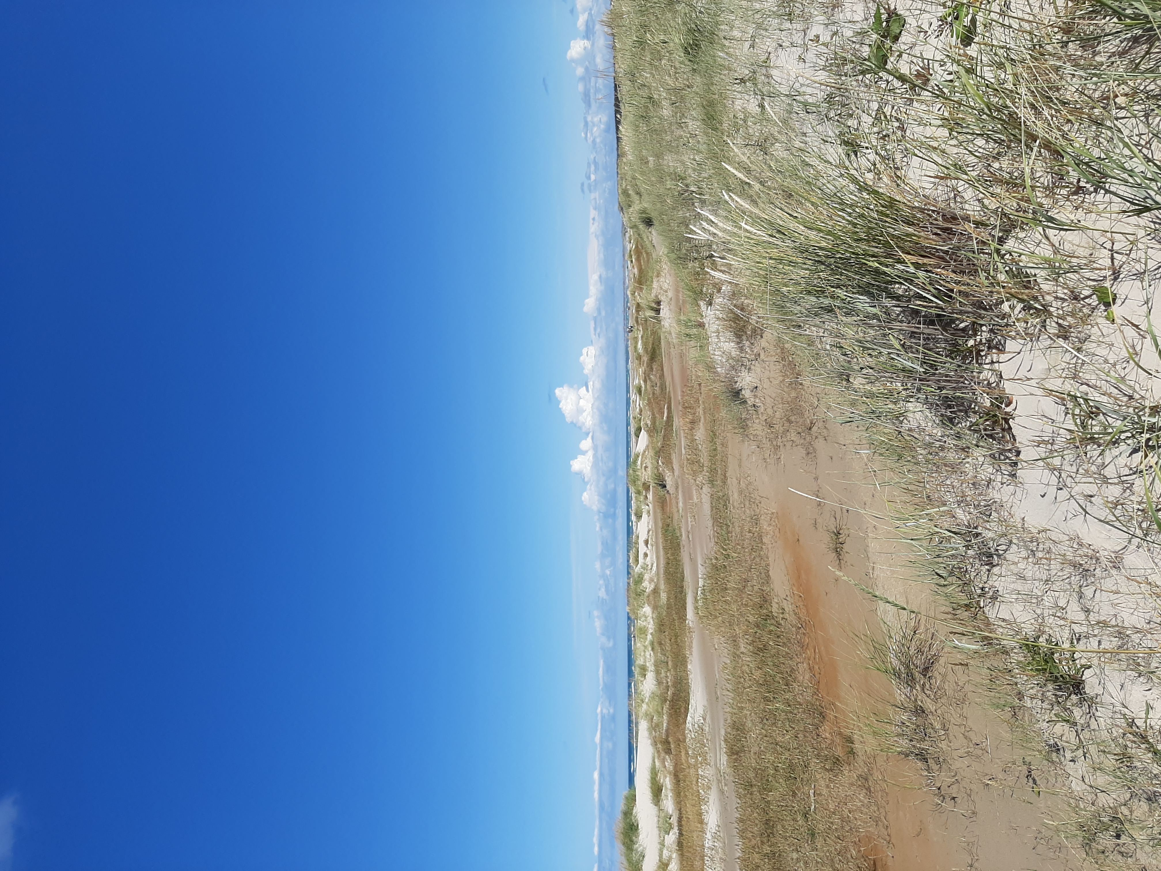 Strand Düne